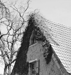 hidden and weathered (Rosmarie Voegtli) Tags: triangle hidden weathered building house landhouse farmhouse moosach munich münchen architecture tree blackwhite