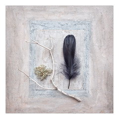 STILL LIFE (Stan Farrow Photography) Tags: square texture twig black feather still life