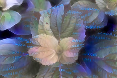 Written on the Leaves (Eclectic Jack) Tags: ddg generator dream deep processing processed process post manipulated leaves blue purple