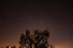 Shooting Stars (Matahyus) Tags: notte stelle night stars long exposure esposizione canoniani cielo sky tree albero costellazione astro canon canon1200d