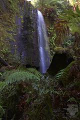 Lower Congram Falls (edarnfieldWK) Tags: congram falls otways upper lower creek aire river pine plantation william kendrick hopetoun