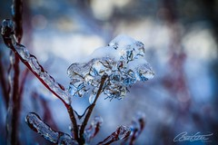 Garden of ice (corineouellet) Tags: trees winter canada ice nature canon frozen focus frost quebec details verglas arbre glace frosted winterscene naturel canonphoto bokeh