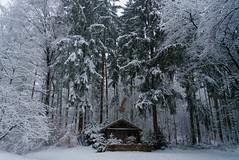 RU_201902_DerchingerForst_010_x (boleroplus) Tags: arbre etoiles foret horizontal maison neige paysage promenade derching bavaria germany de