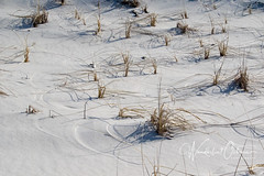 Dune Grass (wanderlust octopus) Tags: 2019 conservation dunegrass dunepreservation dunes environment february grass islandbeachstatepark jerseybeach jerseyshore naturalhabits newjersey parks paths sandpatterns winter beach