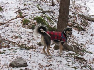 Trill on a Winter Walk