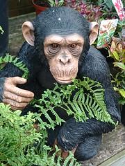 Notcutts Garden Centre - Chimpanzee (ell brown) Tags: monkspath shirley solihull westmidlands england unitedkingdom greatbritain stratfordrd stratfordrdshirley notcutts notcuttsgardencentreandrestaurant notcuttssolihull solihullnotcuttsgardencentre mobile mobileshots sony sonyxperiaxz3 chimpanzee