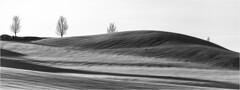 Winter light . (:: Blende 22 ::) Tags: deutschland germany winter bayern wintertime clouds cloudy wolken bewölkt sonne sun sunshine gegenlicht backlight trees bäume snow schnee wonderland canoneos5dmarkii black white blackandwhite blackwhite bw allgäu oberstaufen winterwonderland canonef70200mmf4lisiiusm