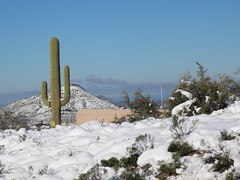 north-scottsdale-1902230131 (nagerfran) Tags: cactus winter desert storm snow cold freeze arizona scottsdale tontonationalforest