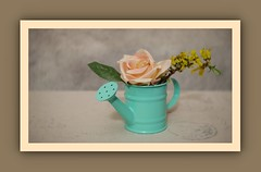 Vase with Flowers (N.the.Kudzu) Tags: tabletop stilllife small turquoise pitcher vase flowers rose forsythia canoneosm lensbabytrio28 lightroom photoscape frame