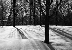 Shadows & Moods (HW111) Tags: bw blackandwhite monochrome moody park shadows snow trees winter hollywilson canada ontario