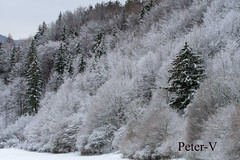 Winter morning in the woods (peter.vrab2) Tags: holiday scenery peaceful december land hoarfrost winter alpine forest snowfall hoar vacation quiet fantastic january travel fabulous landscape outdoor picture picturesque xmas blizzard nature snow background amazing ski beautiful mountain view fir scenic lapland year panoramic splendid white frost frozen christmas adventure panorama tree natural fairytale wood nobody new country
