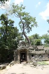 Angkor_Ta Prohm_2014_12