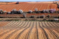 Vinyes de Cariñena, Aragó (MARIA ROSA FERRE) Tags: vinyesdecariñena aragó