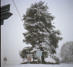 Nieve. (javp82) Tags: yashica mat 124g italia piamonte novara diciembre film pelicula 6x6 120mm