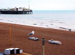 A Winters Day (WHO 2003) Tags: brighton promenade beach sea pier gull lamp