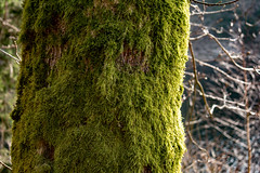 Moss (F5Photos_) Tags: landscape harz germany earth moss spring wanderlust