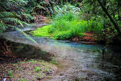 Hamurana Springs (ncs1984) Tags: hamurana springs new zealand north island canon 6d travel color colour water spring hamuranasprings newzealand northisland canon6d nature beautiful beauty