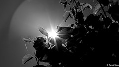 Backlight (patrick_milan) Tags: nature sun backlight contrejour noir blanc cof058mari cof058mark cof058mvfs cof058dmnq cof058john cof058uki