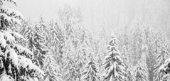 Damüls (Max Pa.) Tags: damüls ski winter tree alps alpen wald trees snow whi white black schwarz weiss bäume natur canon 5d 2470mm nature photographers forest berge berg mountain mountains austria