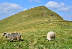 Under Blyznytsya Velyka | Ukranian Carpathians (Rostam Novák) Tags: nature landscape mountains hills carpathians karpaty sheep green grass blyznytsya velka velyka velykablyznytsya ukranian