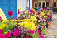Welcome Spring - Bright Flowers and Chairs (aaronrhawkins) Tags: flowers chairs multicolor vibrant color spring sprintime bright welcome festive happy colors sandiego marina shops retail california season aaronhawkins