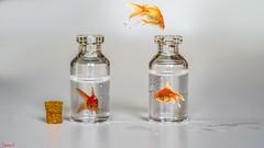 April Fools - 6629 (ΨᗩSᗰIᘉᗴ HᗴᘉS +56 000 000 thx) Tags: macromondays aprilfools poisson fish poissondavril manipulation