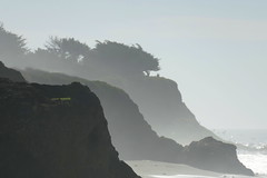 Küste - Coast (ivlys) Tags: usa california routenr1 küste coast diesig hazy baum tree felsen rock pacific ozean ocean blume flower gelb yellow landschaft landscape natur nature ivlys
