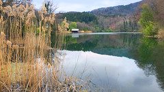 Early spring on the small lake - (rotraud_71) Tags: spring bechtesgadenerland oberbayern höglwörthersee water reed trees reflections hut sky