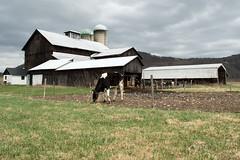 1873 and still going (crgillette77) Tags: pennsylvania bradfordcounty miller 1873 barn