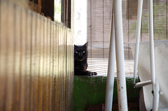 Negrito (Gwenlsh) Tags: cat gato pet animal cute