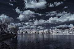 Clouds And Blue Skies Over Lindo Lake - Infrared (Bill Gracey 22 Million Views) Tags: infrared ir convertedinfraredcamera lindolake nature clouds waterfowl birds sky lakeside highcontrast vegetation channelswapping surreal reflections trees