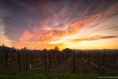 Sunset on Dry Creek Rd. (tom911r7) Tags: tombrichta tombrichtaphotography tombrichtaworkshops sunset vineyard winecountry napavally napa wine landscape travel travelphotography
