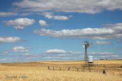 La Serena, plaine et éolienne   plain and windmill ([ ͆ ◎] Bernard LIÉGEOIS) Tags: espagne españa spain estrémadure extremadura laserena paysage landscape