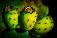 Tunas verdes (mgschiavon) Tags: plants green california cactus alive