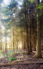 20170330_183125 (Geert Van Keymolen) Tags: 2017 bambrugge belgien belgique belgium belgië erpemere europe galaxys6edge samsung samsungs6edge bos buitenshuis colour couleur draussen exterieur forest forêt kleur natur nature natuur outdoor wald vlaanderen be