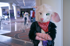 Redacted Rat_FTM 2019_05 (Eshe Is Life) Tags: rat rodent bruiser greaser fight king sassy saucy hot tough rough injury injured eye nose crown fur furry convention hotel leather jacket fashion fuzzy confident cool edgy