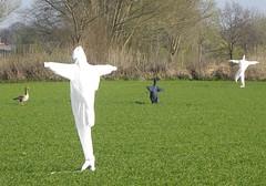 Danse macabre (simonpfotos) Tags: goose scarecrow dutchlandscape
