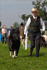 Little Pony (meniscuslens) Tags: lady hat shetland pony arena evcent grass bucks county show buckinghamshire weedon aylesbury