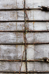 Climbing (Mike Matney Photography) Tags: 2019 canon eos6d illinois march midwest sparta barn decay farm rural vine rope silo farming