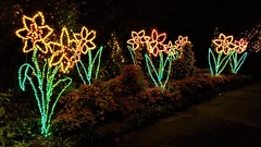 Bellingrath Magic Christmas in Lights (ciscoaguilar) Tags: christmas bellingrath lights alabama theodore