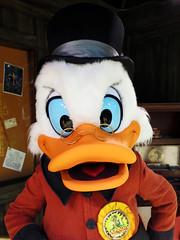 Scrooge McDuck (meeko_) Tags: scrooge mcduck scroogemcduck duck ducktales uncle unclescrooge characters disneycharacters scroogesoutpost donaldsdinobash dinolandusa disneys animal kingdom disneysanimalkingdom themepark walt disney world waltdisneyworld florida