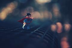 man of steel (christian mu) Tags: botanicalgarden botanischergarten germany münster muenster christianmu lego legominifiguren legominifigures bokeh depthoffield dof sony sonya7riii sonya7rm3 zeiss 35mm 3514 distagon3514 distagon toys superman