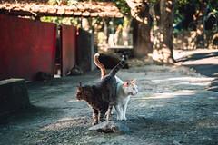 (Cat Zheng) Tags: catzheng catzhengphotography fujifilm xseries xh1