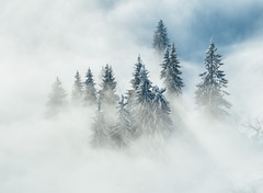 Tranquillity (Sebastian Tontsch) Tags: trees great