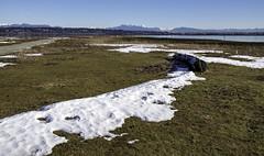 Where the wind blew (Tony Tomlin) Tags: crescentbeachbc britishcolumbia canada southsurrey blackiespit mudbay snow mountains logs
