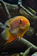(Andres Ulibarrie) Tags: pez acuario vidaacuatica