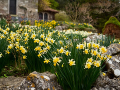 2019-03-23 15.56.00-0366 (Photo_Robson) Tags: brighton europe flickr places plant prestonpark rockgardens subject sussex therockery uk flowers public exif:focallength=25mm geocountry geocity camera:make=olympuscorporation geostate exif:model=em10markii geolocation exif:isospeed=200 exif:make=olympuscorporation exif:aperture=ƒ22 camera:model=em10markii exif:lens=olympusmzuikodigital25mm118