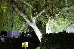 Night Shoot, 91 (doojohn701) Tags: tree branches green dusk dark night warning vegetation hedge buildings shadow streetlighting glare reflection village uk