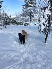 (ARTistDx) Tags: dogs nature mountain blue white winter snow sky tree trees mygarden garden