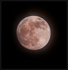 Super Blood Wolf Moon (Ernie Misner) Tags: f8andzoomtothemoon moon superbloodwolfmoon supermoon bloodmoon wolfmoon howl erniemisner 200500mme 200500 lightroom nik topazaigigapixel upsampling tagthemoon